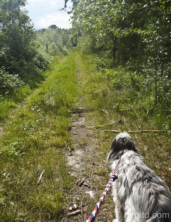 Auf dem Weg zu den Holunderbüschen