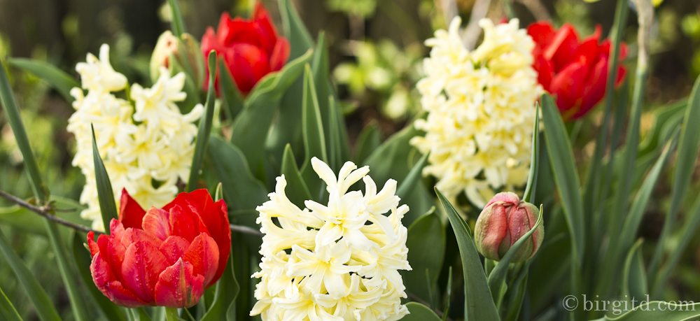 Frühling – da blüht uns was . . .