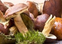 Wald-Pilz-Pfanne