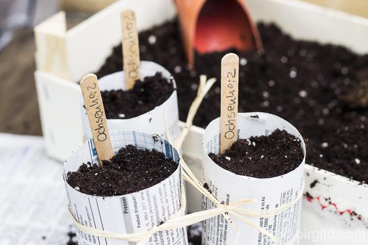 Samen in die Töpfchen geben, angießen, mit einem Etikett versehen und in ein wasserundurchlässiges Behältnis stellen