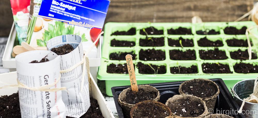 In die Töpfe, fertig, los – mein neues Gartenjahr hat begonnen ( Vorkultur )