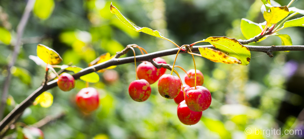 Herbst-Impressionen – ein kleiner Garten-Spaziergang im Oktober