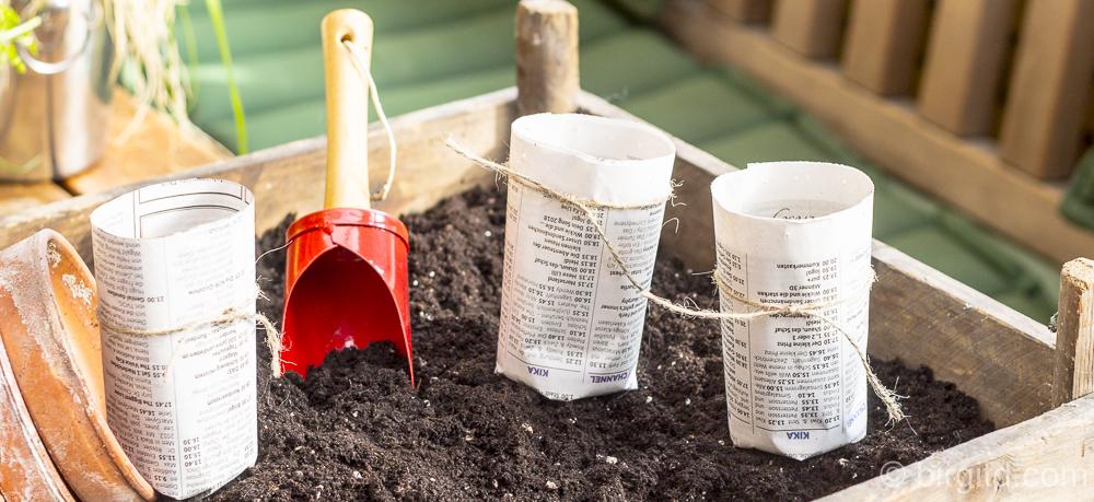 Tomatenanzucht: Sät her – mein Gartenjahr hat begonnen!