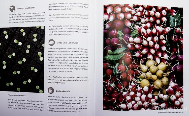 Gemüse und Kräuter im Garten Radieschen (Foto aus dem Buch)