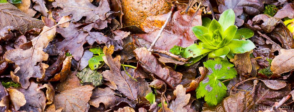 Gartenarbeiten und Tipps im Januar