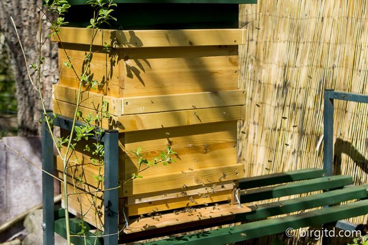 Honigbienen vor dem Flugloch